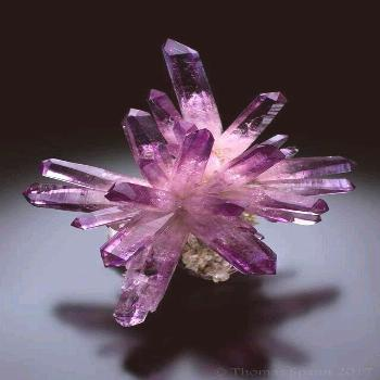 Amethyst Crystal from Las Vigas,Mexico.Nick Stolowitz Photo: Mineral Masterpiece,Amazing Geologist