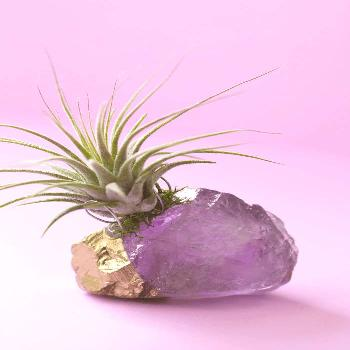 Gold Dipped Amethyst Crystal Air Planter