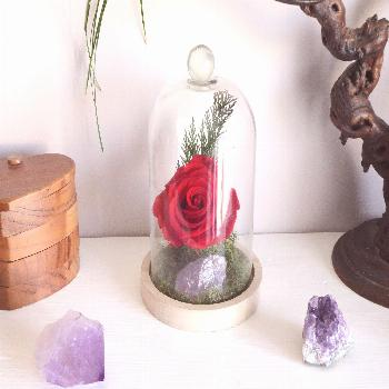 Terrarium with eternal rose and amethyst Terrarium eternal rose and amethyst decoration for living